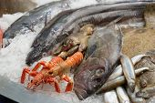 picture of saltwater fish  - A lot of fresh saltwater fish on market display  - JPG