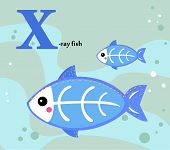 foto of x-ray fish  - Animal alphabet for the kids - JPG