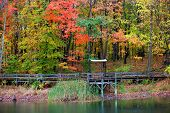 image of board-walk  - Board walk and relaxing shelter with colorful autumn trees - JPG