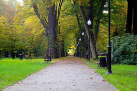 stock photo of b-double  - The photograph shows the gravel, the park alley. With two side alleys is a double row of tall trees on the right side is a row of electric, lighthouse park. On the right side, in the background is visible rhododendron bush. ** Note: Soft Focus at 100%, b - JPG
