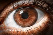 picture of human eye  - Brown human eye extreme macro shot - JPG