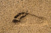 pic of footprints sand  - Close up of a single foot or footprint of a right foot set deeply into sand - JPG