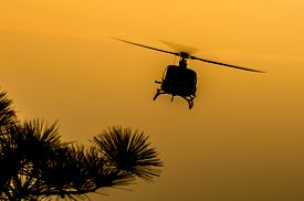 image of helicopters  - The patrol helicopter flying in the sky