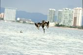 stock photo of sky diving  - Pelican diving with the buildings in the background and ocean below - JPG