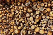 stock photo of firewood  - Firewood fire wood pattern texture in Spain forest - JPG