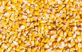 image of corn  - Grains of a ripe corn husked from corn cob - JPG