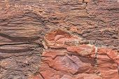 picture of petrified  - Close up of a Tree Trunk at the Petrified Forest National Park in Arizona - JPG