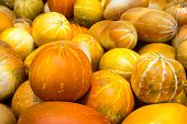 picture of muskmelon  - muskmelon in the market - cucumis melo - cantaloupe fruit