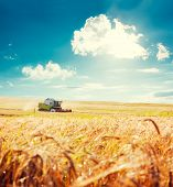 image of combine  - Working Harvesting Combine in the Field of Wheat - JPG