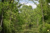 stock photo of swamps  - a tree lined swamp, with a blue cloudy sky.