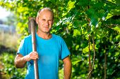 pic of hoe  - Portrait of the farmer with hoe in the grape plantation - JPG