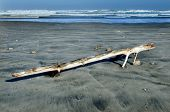 stock photo of mile  - A man and an old tree log that washed on Ninety Mile Beach Northland New Zealand - JPG
