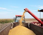 stock photo of auger  - Grain auger of combine pouring soy bean into tractor trailer - JPG