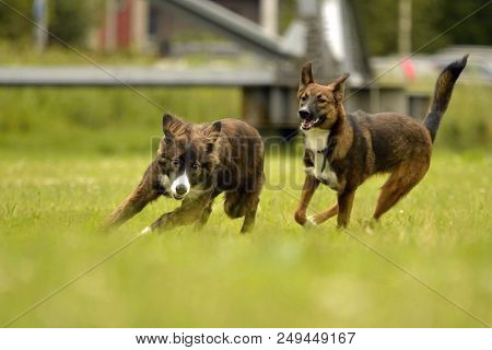 poster of Dogs play with each other. Merry fuss puppies. Aggressive dog. Training of dogs.  Puppies education,