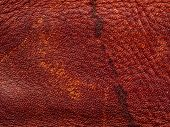 Skin Texture. Closeup Of Leather Texture. Leather Products poster