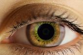 The Human Female Eye Is Light Brown. Eye Close poster