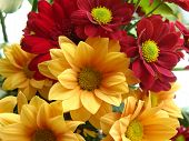 stock photo of suny  - bouquet of colorfull nice summer flowers in suny day - JPG