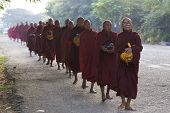 Buddhist Monks Burma Myanmar