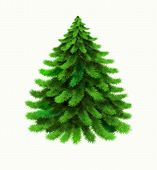 Christmas Tree Vector Isolated On White Background. Winter, Xmas Design Element. Realistic Vector Ic poster