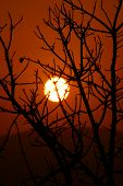foto of denude  - spooky scenic of denuded tree and the sunset - JPG