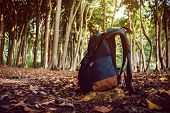 Blue Backpack In The North Siberian Taiga Forest. Subtropical Forest In Havelock Island Andaman And  poster