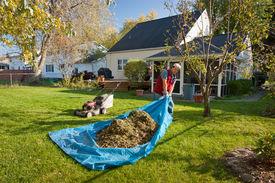 picture of tarp  - Man pulling tarp full of leaves and grass - JPG