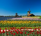 stock photo of windmills  - Photo of windmill in Holland with blue sky - JPG