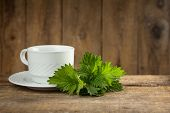 Stinging nettle ( Urtica dioica ) on wooden table