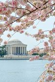 Washington DC, Jefferson Memorial during cherry blossom festival