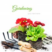 stock photo of pot-bellied  - Red flowers with garden tools isolated over white - JPG