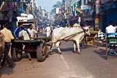 Ox Chart In The Narrow Streets Of Old Delhi