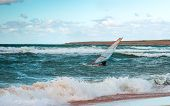 Sea Windsurfing Sport Sailing Water Active Leisure Windsurfer Training On Waves Summer Day