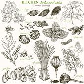 stock photo of spice  - Kitchen herbs and spice - JPG