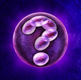 pic of human egg  - Genetic questions medical health care concept with a fertilized human egg embryo and a group of dividing cells in the shape of a question mark as a concept for fertility DNA and gene related issues - JPG