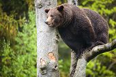 image of bye  - Brown bear  - JPG