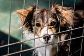 stock photo of animal cruelty  - Dog behind bars  - JPG
