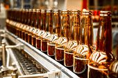 picture of malt  - Beer bottles on the conveyor belt brewery