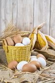 picture of hen house  - Basket with fresh range eggs and cereals to feed hens in the hen house - JPG