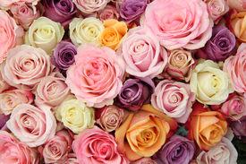 foto of pastel  - Rose arrangement for a wedding - JPG