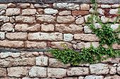 stock photo of old stone fence  - Old Stone Wall With Plants - JPG