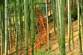 stock photo of bamboo forest  - A roller coaster track through a bamboo forest in Anji national Bamboo Forest in Anji County China - JPG