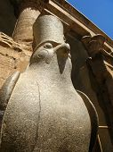 stock photo of horus  - Granite statue of the Egyptian falcon god Horus inside the Temple of Edfu in Egypt - JPG