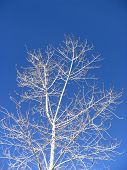 Tree Against Sky poster