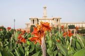 stock photo of rashtrapati  - Flowers in a formal garden - JPG