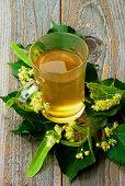 pic of linden-tree  - Tea of Linden - JPG