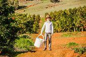 picture of mandarin orange  - Smiling happy healthy boy on citrus farm holding white bucket ready to pick oranges - JPG