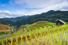 stock photo of rice  - Rice fields on terraced in rainny season at Mu Cang Chai - JPG
