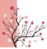 image of cherry trees  - cherry tree vector - JPG