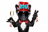 Happy New Year Dog Celberation poster