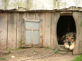 stock photo of dog-house  - lonely dog watching out of his kennel - JPG